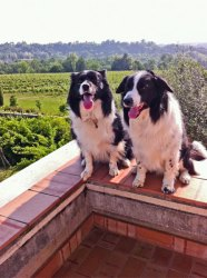 Golden rules for winery visits