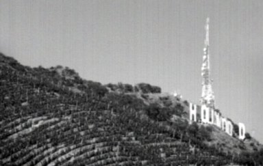 Hollywood Classic Vineyard