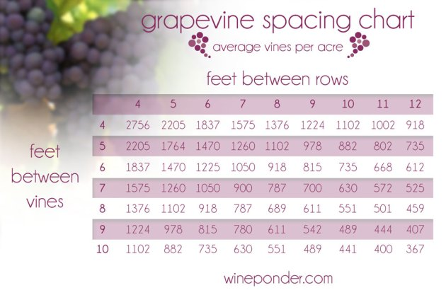 Grapevine Spacing Chart