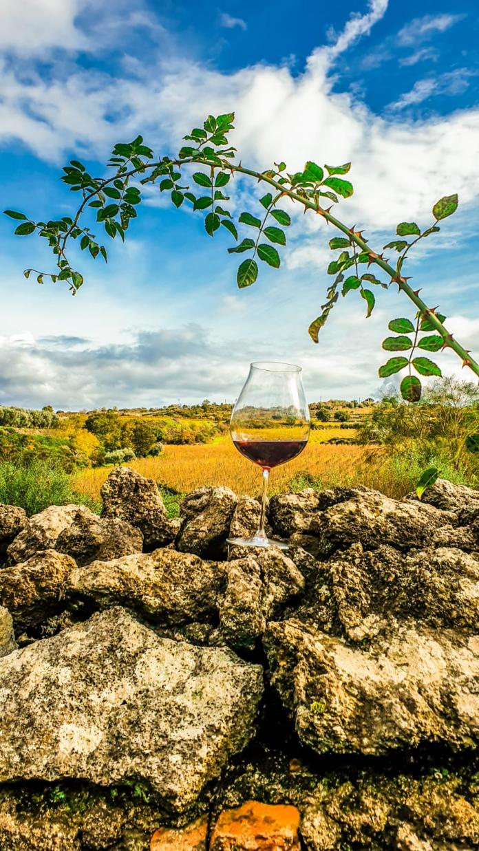 wine glass landscape graci winery