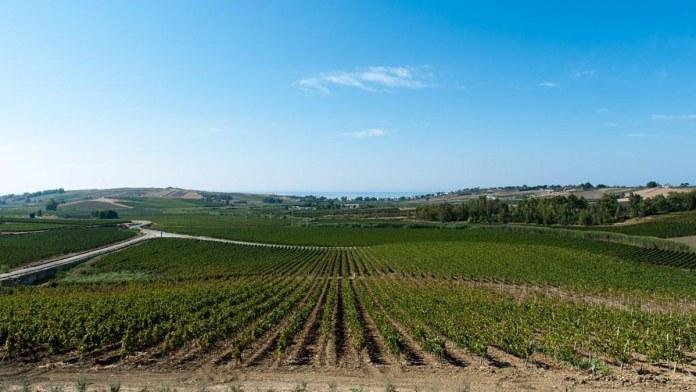 Vini Siciliani annata 2020