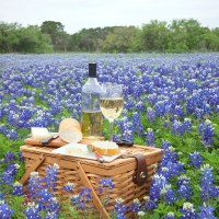 Learn About the Best Texas Hill Country Wineries to Visit