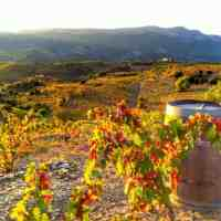 Understanding The Wine Regions of Spain | DO vs DOCa and DOQ