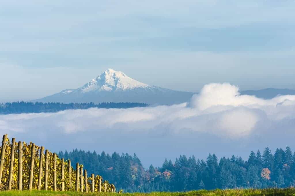 The Essential Willamette Valley Itinerary & Guide for Wine Lovers