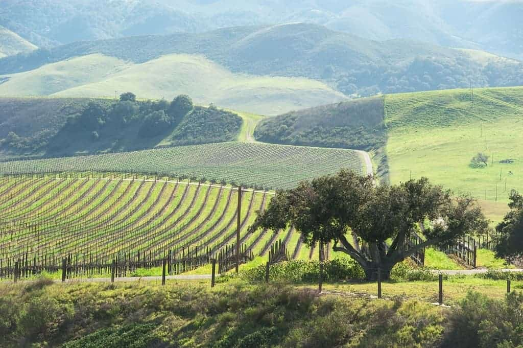 3 Stunning Stops To Make Driving From Los Angeles to Napa