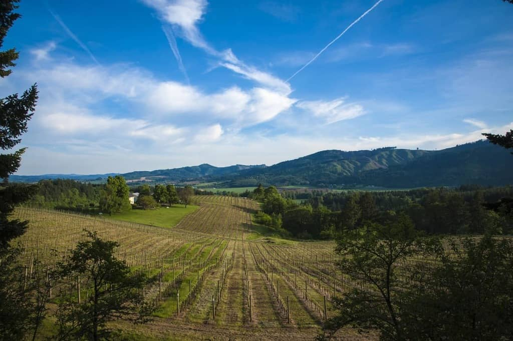 Willamette Valley Sparkling Wine: A Buyer's Guide