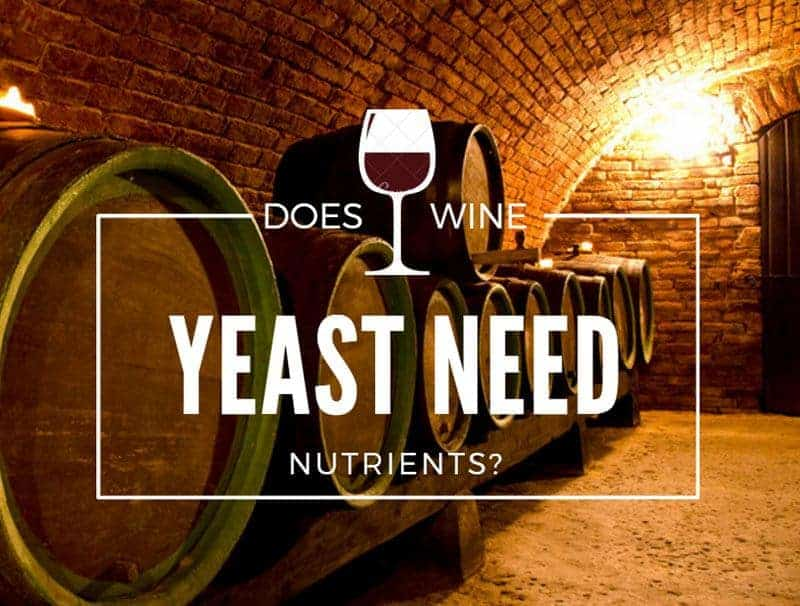 Does Wine Yeast Need Nutrients?