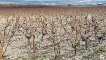 Wine Up en Vega Sicilia 20151127_131203_23013573109_o