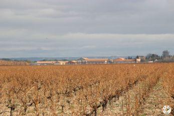 Wine Up en Vega Sicilia IMG_3053
