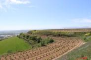 Finca Alto Cantabria de Bodegas Valdemar (D.O.Ca. Rioja)