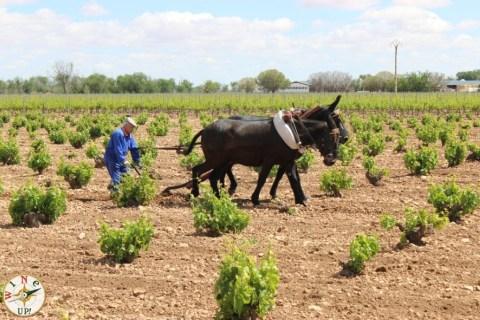 Foto: Joaquín Parra Wine Up!