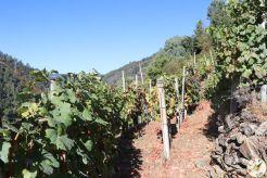 wine up IMG_2836
