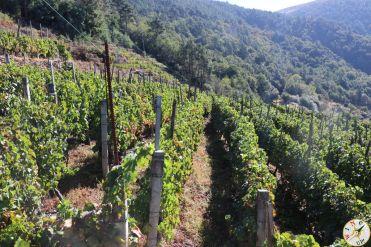 wine up IMG_2907