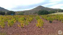 wineup 20161111_134759 campo de borja