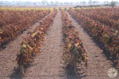wineup IMG_0899