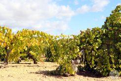 wineup IMG_3491-2