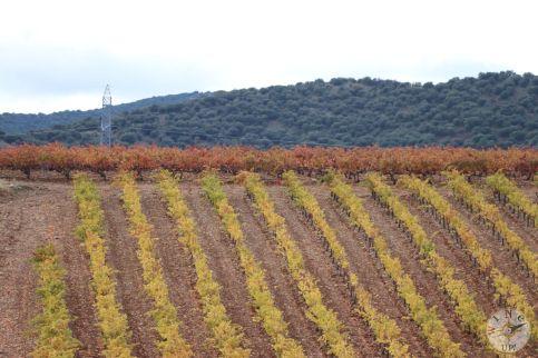 wineup IMG_3921