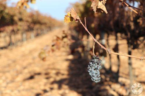 wineup IMG_4233