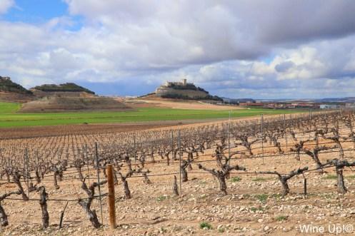 Viñedos de Pago de Carraovejas con el castillo de Peñafiel al fondo