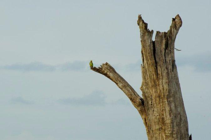 Udawalawe Park in Sri Lanka alberi - 1
