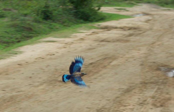 uccelli udawalawe