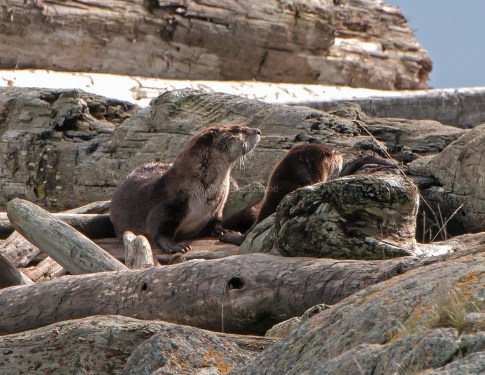 March Otters13