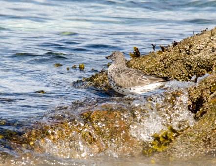March Surf Birds1