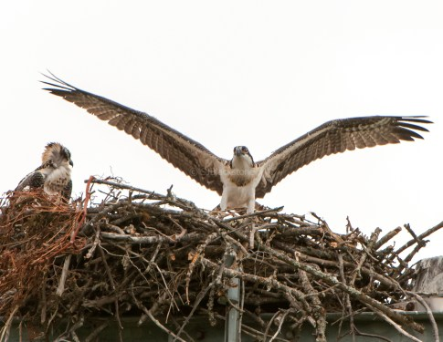Safe in the nest