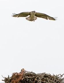 Flight practice