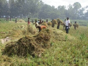 A group of people working together to carry harvest