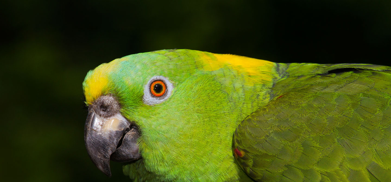 green-bird-slider