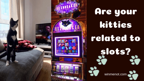 Are your kitties related to slots