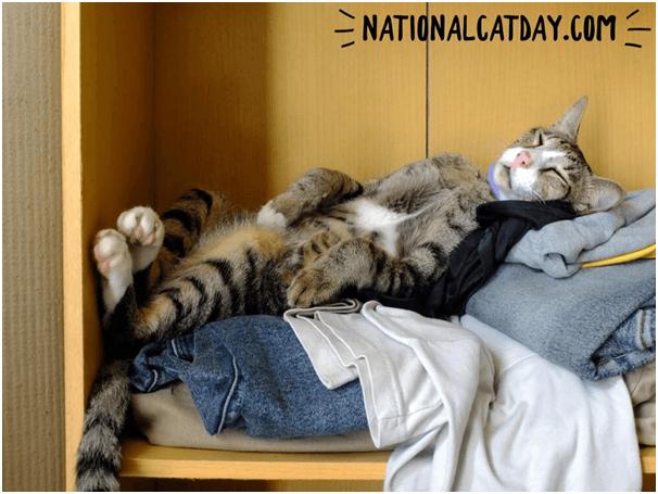 Celebrate cat day