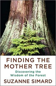 nonfic-finding-the-mother-tree