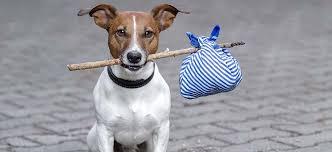 Keeping your dog safe