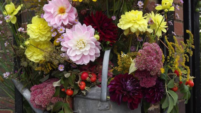 Dahlia display, Winterbourne House and Garden, Digging for Dirt
