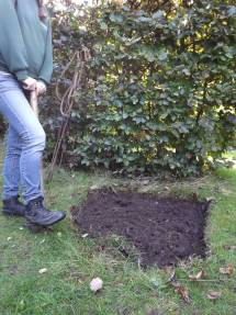 Lawn repair, Winterbourne House and Garden, Digging for Dirt
