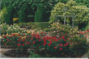 The Sunken Garden was re-planted with hybrid tea and floribunda roses in 1975, Winterbourne House and Garden, Digging for Dirt