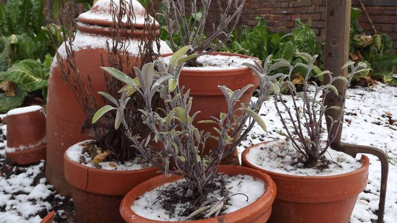 Herbs in the Walled Garden, Winterbourne House and Garden, Digging for Dirt