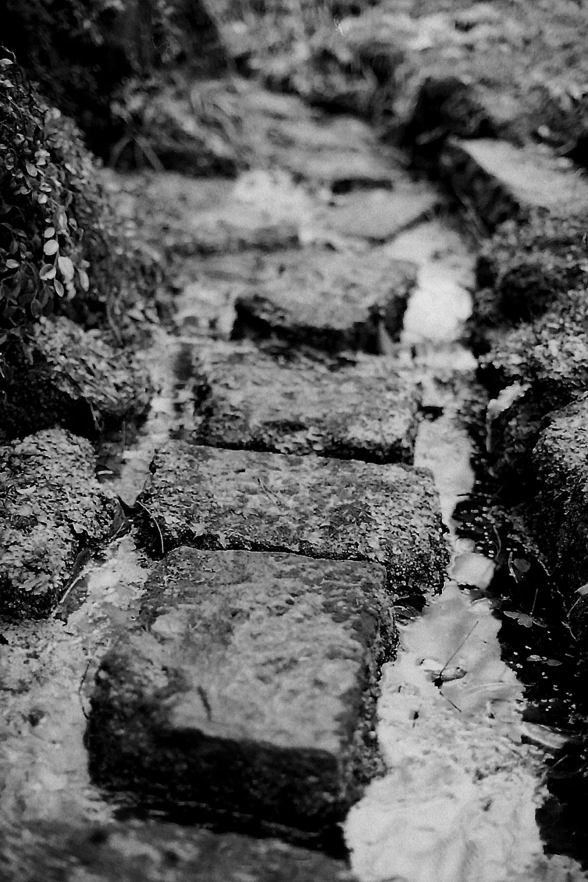 Stepping stones in the Sandstone Rock Garden, photograph by Chris Rigby, film photography, Winterbourne House and Garden, Digging for Dirt