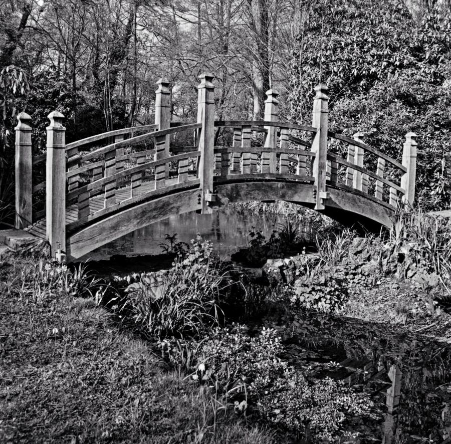Japanese Bridge, photograph by Omar Mian, Winterbourne House and Garden, Digging for Dirt