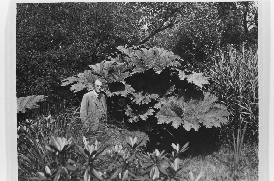 John Macdonald Nicolson with Gunnera, 1930s