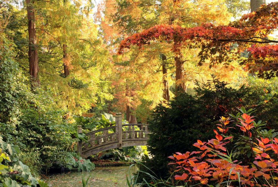 The Japanese Bridge, photograph by Susan Georgiou, Snapshot, Winterbourne House and Garden, Digging for Dirt