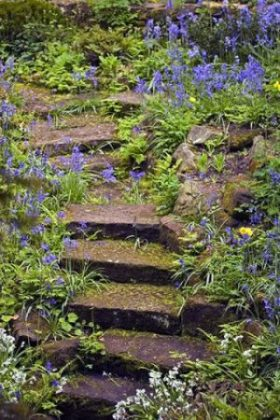 Bluebells in the Sandstone Rock Garden, photograph by Jenny Lilly, Winterbourne House and Garden, Digging for Dirt