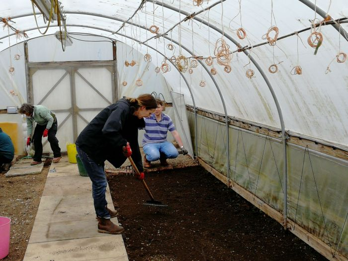 Getting a fine tilth in the Polytunnel, RHS Level 2 Certificate in Practical Horticulture, photograph by David Billings, Winterbourne House and Garden, Digging for Dirt, Lolly Gautier-Ollerenshaw