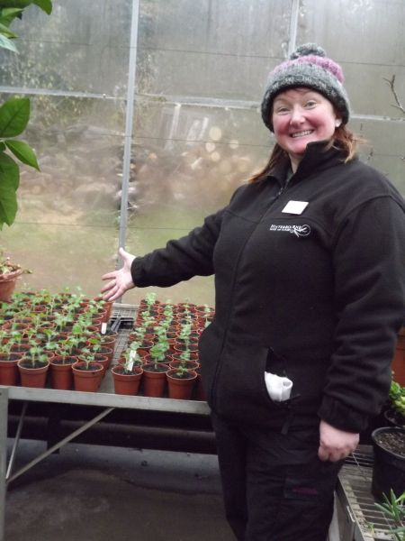 Jude with her newly potted Pelargonium plants, The Week That Was, Winterbourne House and Garden, Digging for Dirt