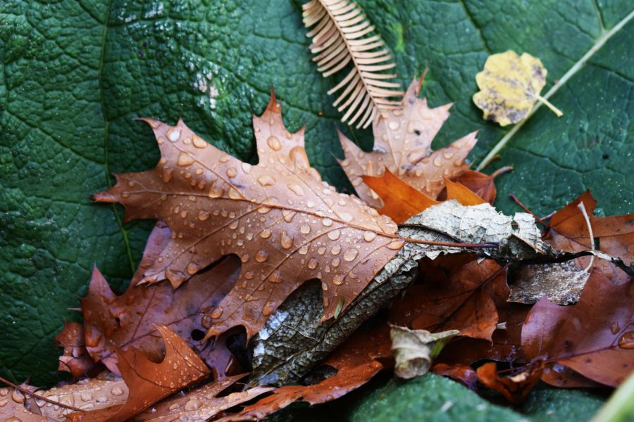 Autumn leaves, photograph by Victoria Buchanan, Snapshot, Winterbourne House and Garden, Digging for Dirt