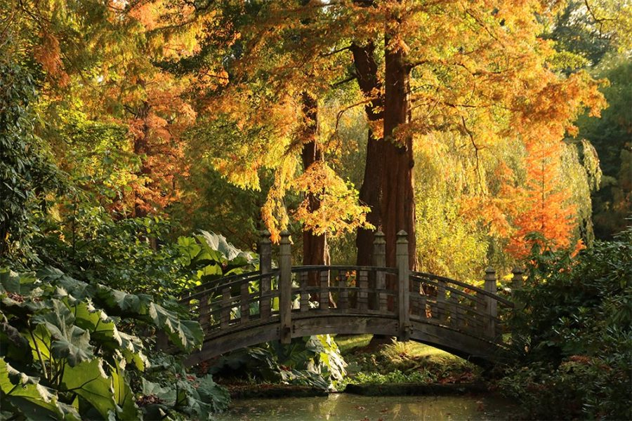 Autumn Japanese Bridge by Susan Georgiou