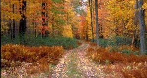 Novembre – A Più Voci
