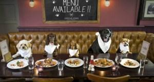 L'ultima moda al ristorante è il menu da cani